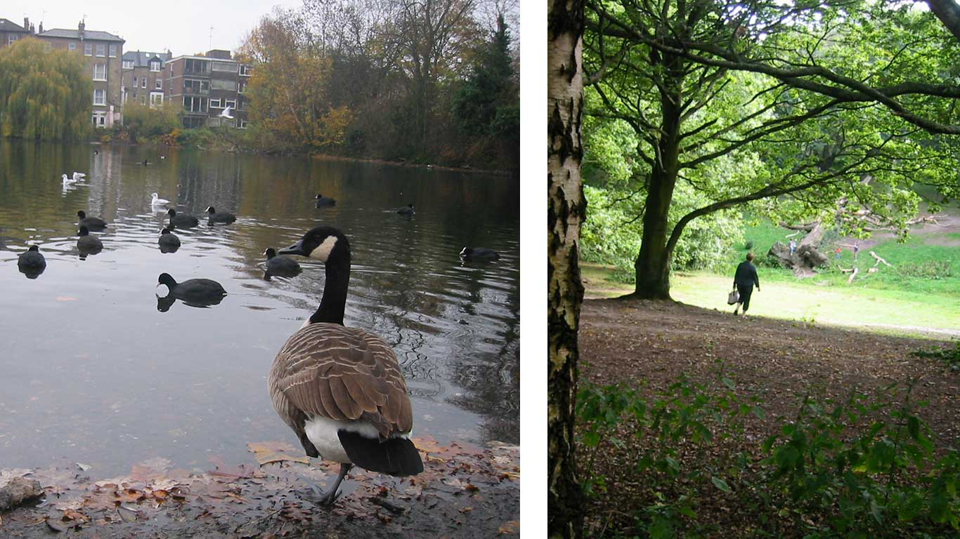 Left: Ducks swimming in a pond. Right: Trees in park.