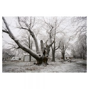 Black and white image of an old tree in the woods