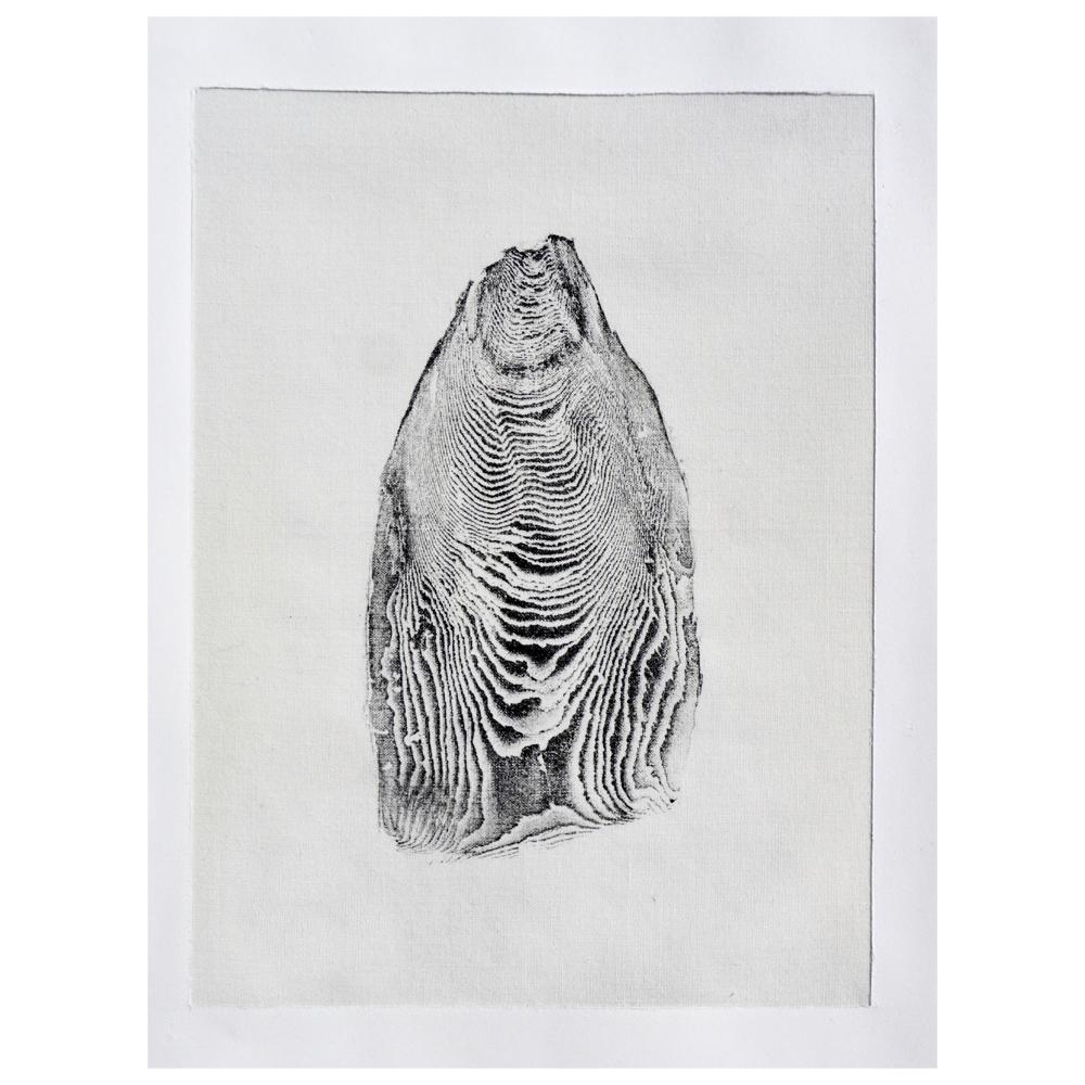 Leave No Trace - Gyotaku print of a foraged cuttlebone - Molly Macleod