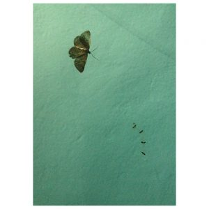 Nature morte, colour photograph, butterfly and 4 ants in a surface choreography on water